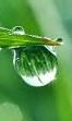 Rain falling from leaf (2)